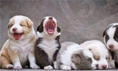 宠物店加盟排行