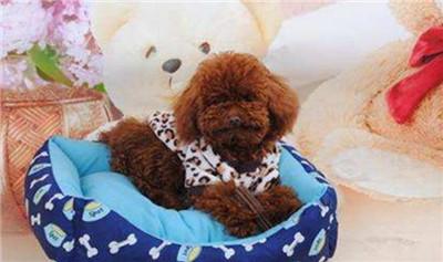 上海宠物店加盟